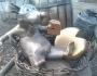 Rat monument 5